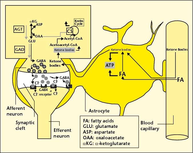 APOE-4: The Clue to Why Low Fat Diet and Statins may Cause Alzheimer's